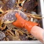 crabbing02