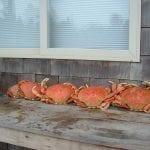 crabbing03