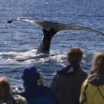 oregon-coast-whale-watching