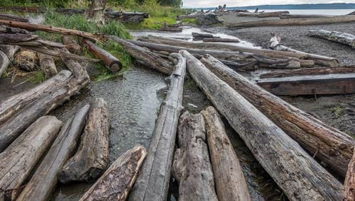 Logs on Rockaway Beach, Oregon