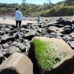beachcombing01