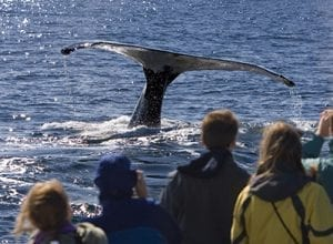 Whale watching, Oregon