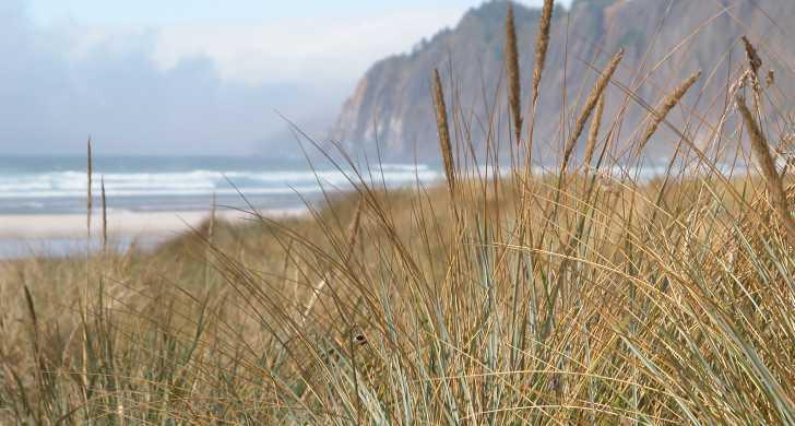 Beach grass with Neahkahnie Mountain in background.