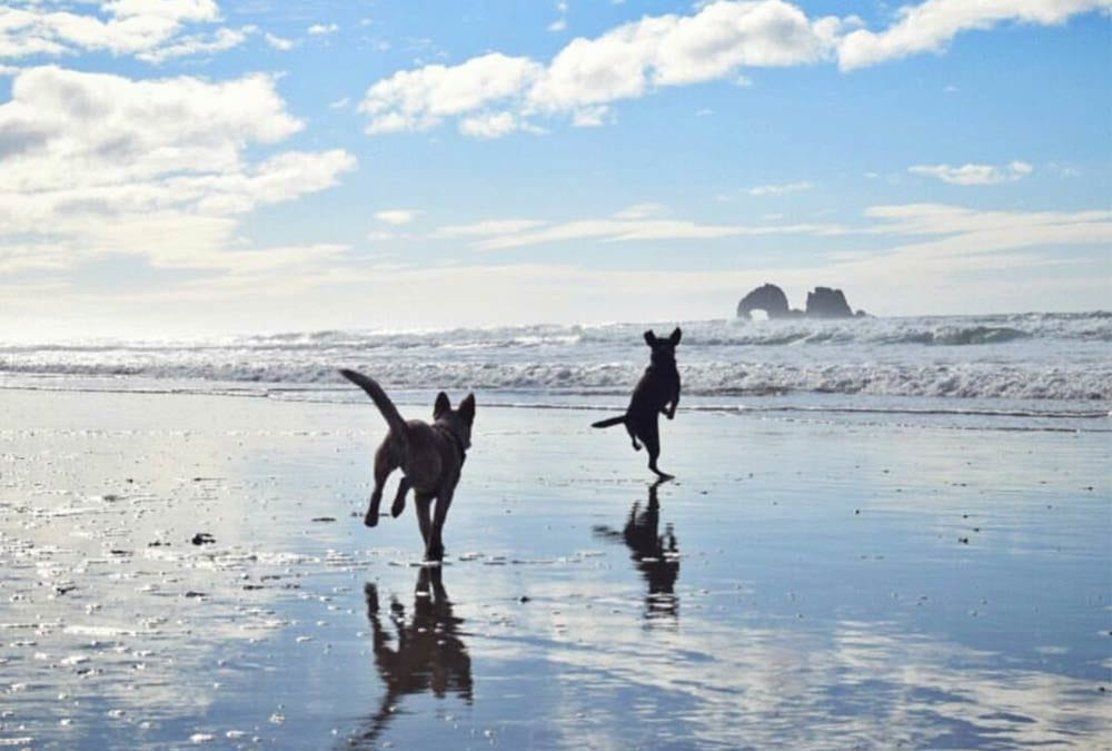 Beach Safety for Dogs