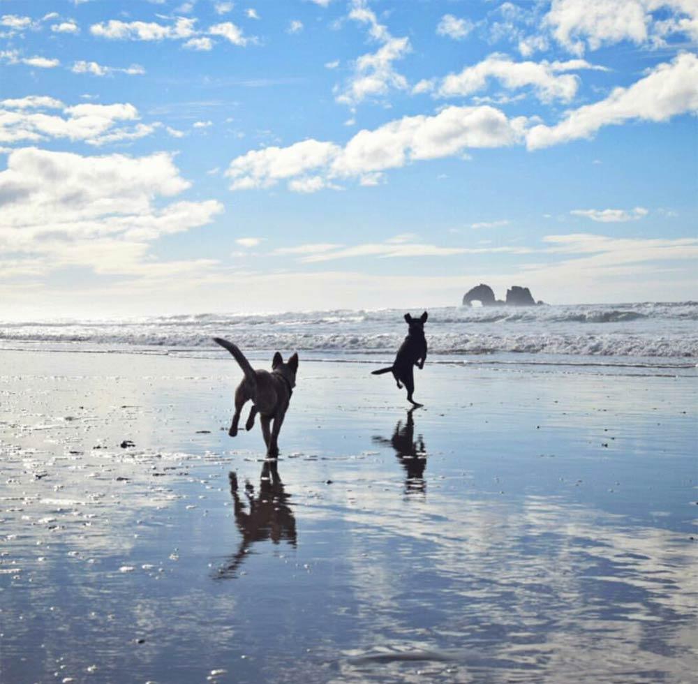 Tips for pets on Rockaway Beach