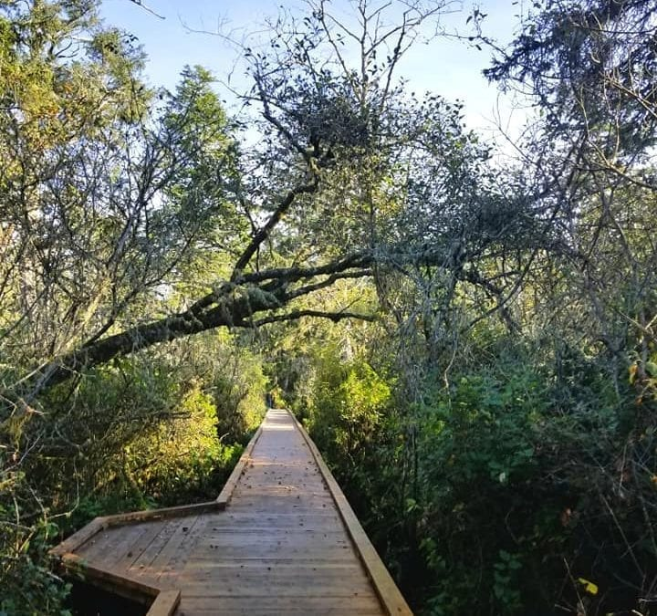 Enjoy this Easy Coastal Hike Through an Old Growth Forest