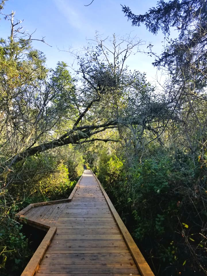 Enjoy this Easy Coastal Hike Through an Old Growth Forest