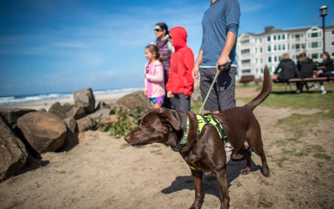 Pet-Friendly Adventures in and around Rockaway Beach