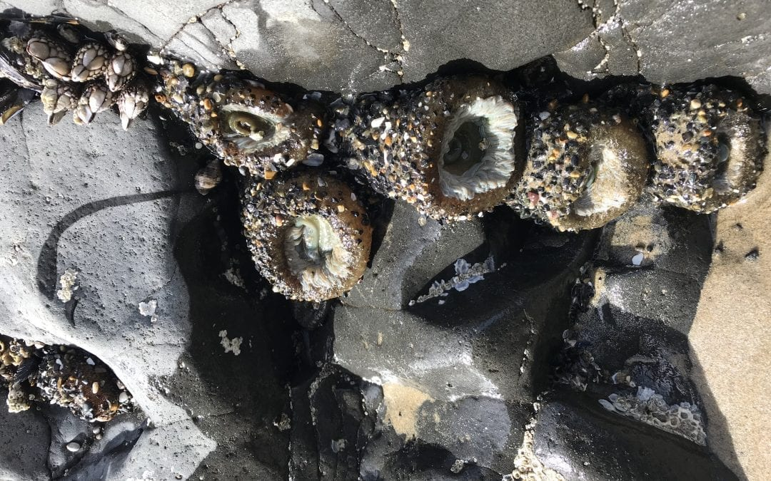 Tidepooling Do's and Don'ts this Summer